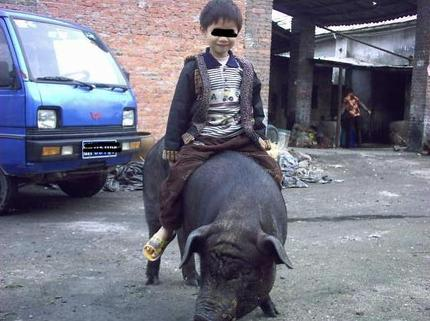 小孩骑猪_搞笑_hao123上网导航