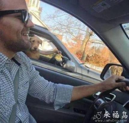 快停车救救我!我变成一条狗了!
