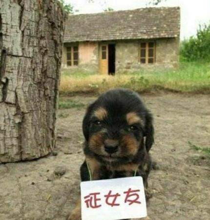 单身狗找女票