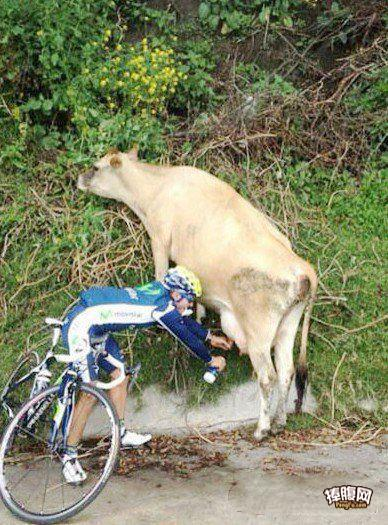 正好口渴,路上有新鲜的牛奶喝